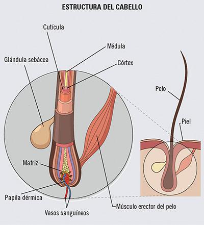 estructura de un pelo dañado y